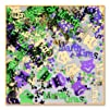 Beistle CN084 Mardi Gras Confetti