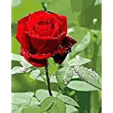 Version 3.0 HD DIY Oil Painting by Numbers Kit Theme PBN Kit for Adults Girls Kids White Christmas Decor Decorations Gifts (V3-Rose) (Color: V3-rose)
