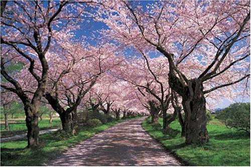 1000ピース 桜色の並木道-岩手 10-648S