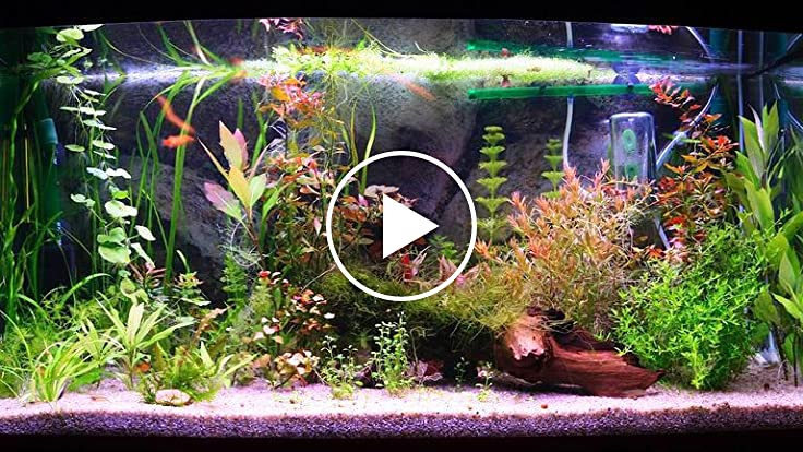 How to clean a fish tank filter for How to clean a fish tank