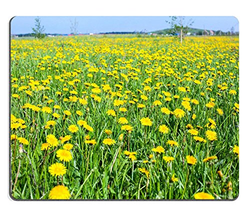 msd-natural-rubber-gaming-mousepad-image-id-28849362-summer-season-with-dandelions-flowers