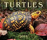 img - for Turtles 2014 book / textbook / text book