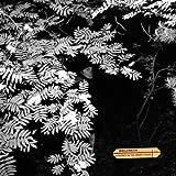 Violence in the Snowy Fields [Vinyl]