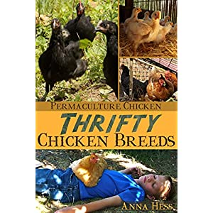 Thrifty Chicken Breeds: Efficient Producers of Eggs and Meat on the Homestead (Permaculture Chicken Book 3)
