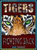 Tigers Fighting Back