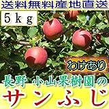 訳あり 【農園より産地直送】 長野県産 サンふじ りんご わけあり品 約4.5kg 12~23個入