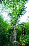 [写真集][世界遺産]夏の屋久島 縄文杉