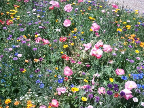 12 pound of perennial annual wildflower seeds bulk from
