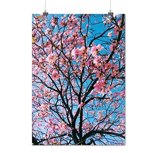 Sakura Arbre Fleur Rose La Matte/Glacé Affiche A3 (42cm x 30cm) | Wellcoda