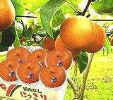 梨 にっこり梨 産地直送 贈答 贈答品 5kg 期間限定 秀品 大玉 豊水×新高