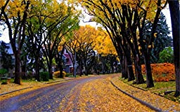 Architecture House Autumn Street City 20X30 Inch Poster Print