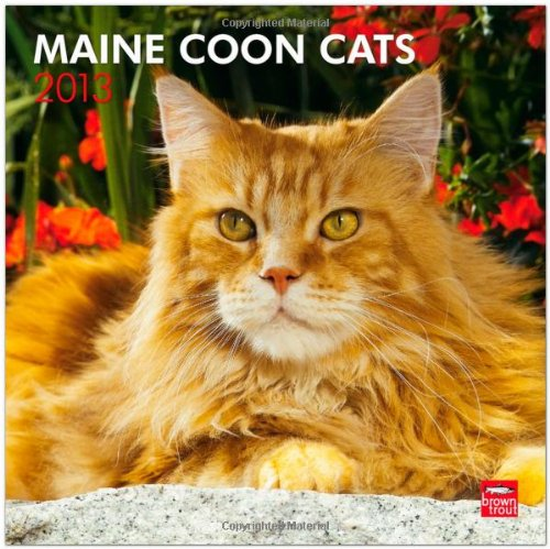 Maine Coon Cats 2013 Square 12X12 Wall Calendar