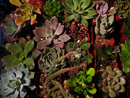 The Best Indoor Plants - Succulents