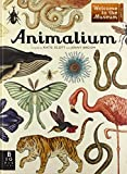 img - for Animalium (Welcome to the Museum) book / textbook / text book