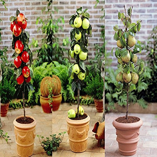 dwarf-apples-and-pears-1-collection