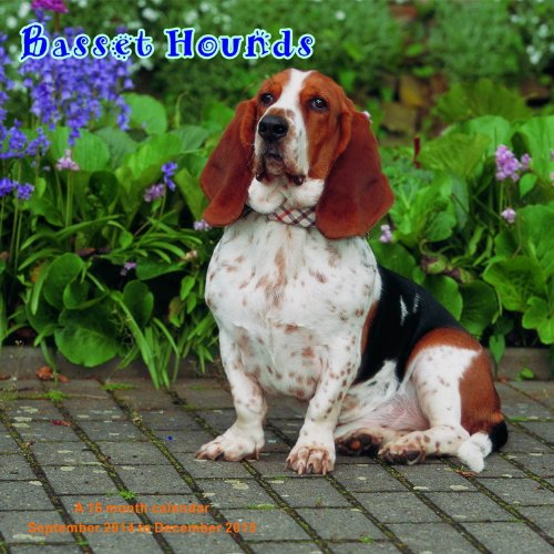 Basset Hounds Calendar - 2015 Wall calendars - Dog Calendars - Monthly Wall Calendar by Magnum