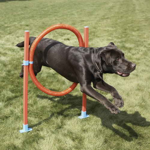 Lixit 1007 - Lixit Jump Hoop Dog Agility Starter Equipment Model 1007 (222395545401) / Аджилити