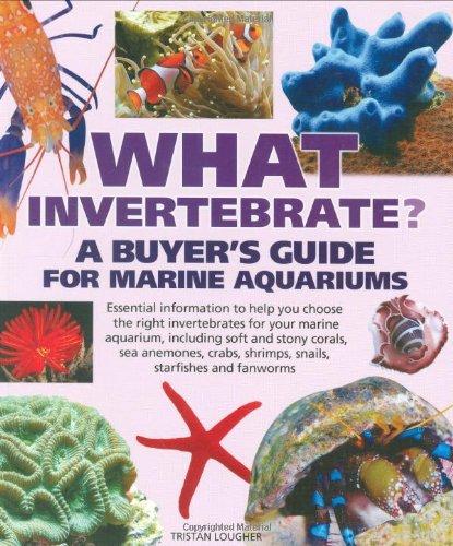 What Invertebrate?