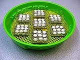 Inkubator für Reptilien und Schildkröten,Brutkasten-Brutapparat-Brutmaschine-Brutschrank-Brutautomat-Brutgerät-Flächenbrüter-Inkubator-Incubator-Motorbrüter-Incubateur-Incubatrice-Broedmachine-Incubadora-Brüter-Couveuse-Schiuse-Hatcher-Necedoras-Eclosoirs-Kuluçka makinesi -