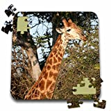 Angelique Cajam Safari Giraffes - South African Giraffe neck to head eating leaves - 10x10 Inch Puzzle (pzl_20124_2)