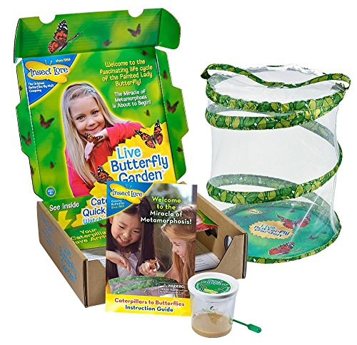 Original Butterfly Garden with Live Cup of Caterpillars (Painted Lady Butterfly Kit compare prices)