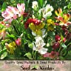 "25 Seeds, ""Dr. Salter's Mix"" Peruvian Lily (Seeds By Seed Needs)"
