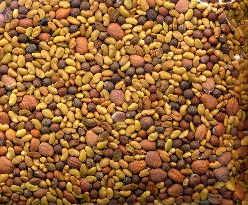 Spicy Mix Of Sprouting Seeds: Broccoli Radish Alfalfa - 1 Pound
