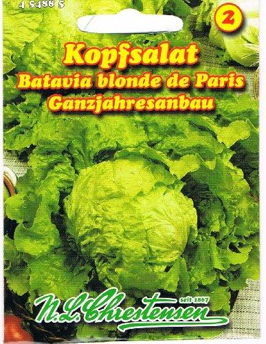 """Kopfsalat """" Batavia blonde de Paris"""" ganzrahresanbau"""