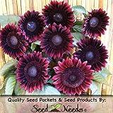 "25 Seeds, Sunflower ""Procut Red"" (Helianthus annuus) Seeds By Seed Needs"