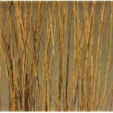 Natural Asian Willow 5 Feet Tall, Bunch of 75