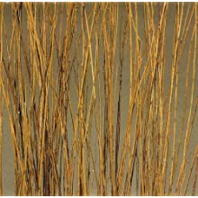 Green Floral Crafts Natural Asian Willow 5 Feet Tall, Bunch of 75