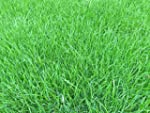 1kg Grass Seed covering 35 sqm, Premi...