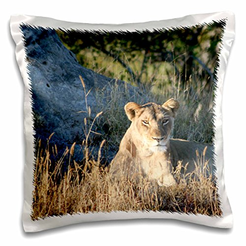 angelique-cajam-big-cat-safari-young-female-lion-searching-for-food-16x16-inch-pillow-case-pc-26827-