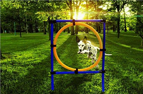 Dog Backyard Playground Equipment : dog outdoor games pet training jump hoop dog agility starter equipment