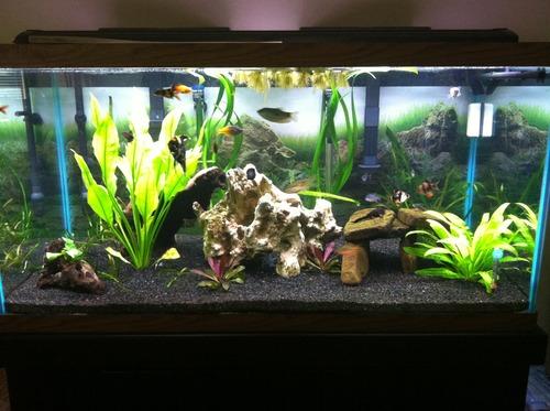 Caribsea Eco Complete 20 Pound Planted Aquarium
