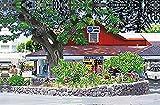 ハワイアン雑貨 インテリア/キャンバス パネル絵(ABCストア2) 【ハワイ雑貨】【お土産】
