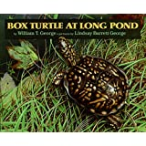 Box Turtle at Long Pond