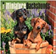 Miniature Dachshunds 2015 Wall Calendar