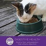 Wellness-Kittles-Crunchy-Natural-Grain-Free-Cat-Treats-Salmon-Cranberries-2-Ounce-Bag