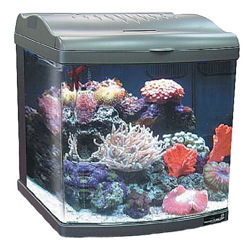 Moonlight Led Aquarium