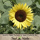 "80 Seeds, Sunflower ""Lemon Queen"" (Helianthus annuus) Seeds By Seed Needs"