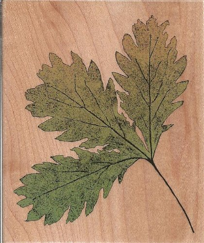 Three Oak Leaves Wood Mounted Rubber Stamp (H2287)