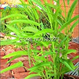 Free Ship 100 Pcs Water Spinach Seeds Vegetables Seed For Home Garden Planting Green Bonsai Easy To Grow Plants...