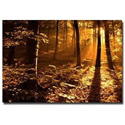 Trademark Fine Art Morning Light by Philippe Sainte-Laudy Canvas Wall Art, 22x32-Inch