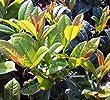 heckenbepflanzung immergrün