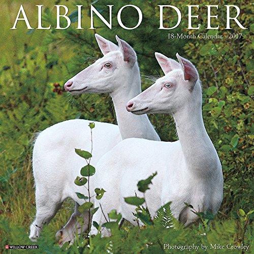 Albino Deer 2017 Wall Calendar