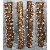 完熟ホダ木 ホダキング 90cm しいたけ 4本セット
