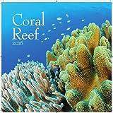 [2016年 壁掛け カレンダー]TURNER/Coral Reef/サンゴ礁 フォト/きれい