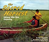 The Sacred Harvest: Ojibway Wild Rice Gathering (We Are Still Here)