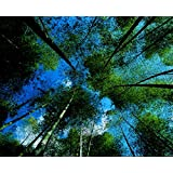 Peel and Stick Non-woven Fabric for Wall Murals Adhesive Wallpaper Bamboo and Forest #hq04-002, 5.6ft x 4.4ft Coupon 2015